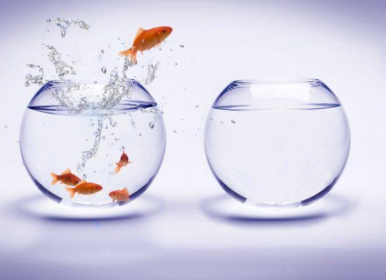 khác nhau giữa dropship và cộng tác viên